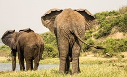 8-days Uganda - exclusive Safari