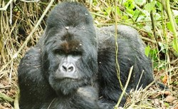 5-day Gorilla Tracking & Volcano Hike