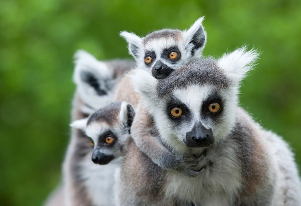 New Madagascar tours