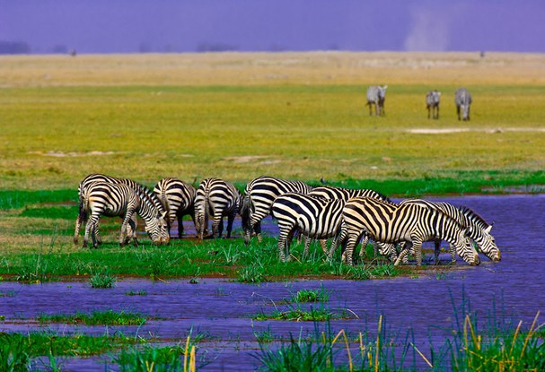 New Kenya tours