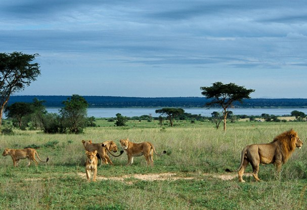 East Africa combi tours